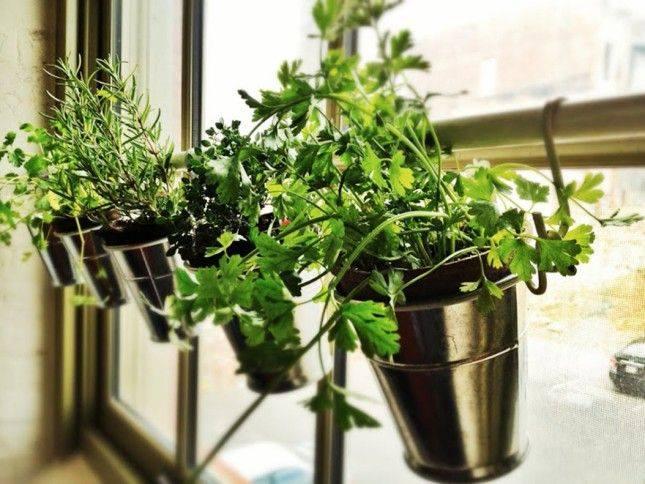 改變居家空間不求人:DIY 植栽練習