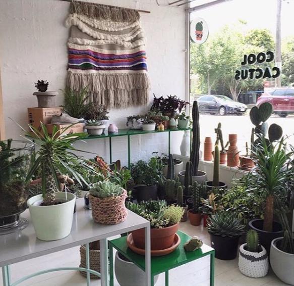 Cool Cactus_11