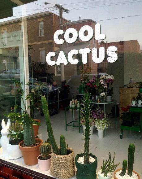 Cool Cactus_15