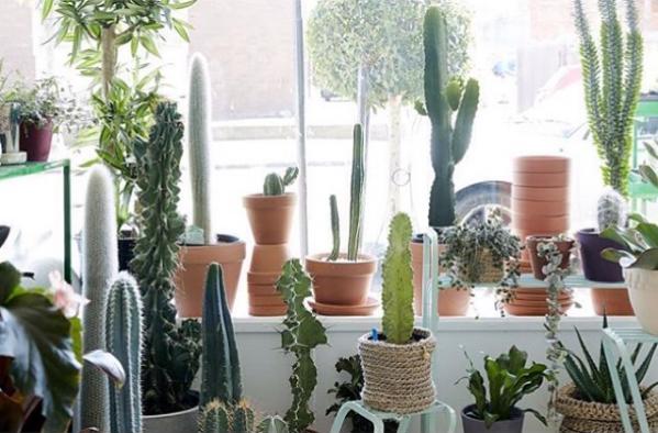 Cool Cactus_6