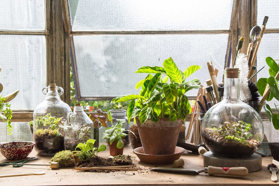 Image Source: London Terrariums Facebook.